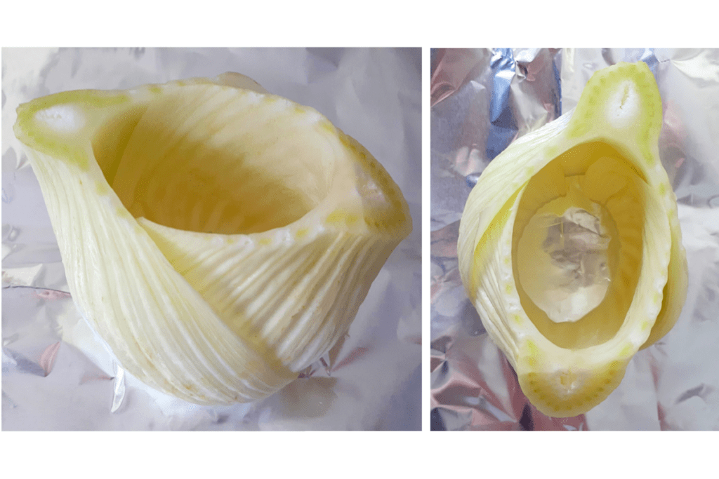 How to cut the fennel bulb, view from the side and from the top